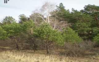 Переуступка права аренды лесного участка